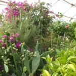 Wo überwintern Ihre Kübelpflanzen?