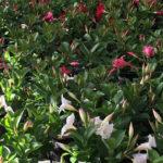 Der Blumenladen ist ab dem 28. April 2020 wieder offen!